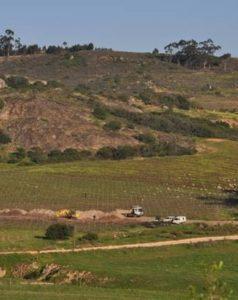 Image courtesy of Grape.co.za.