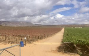 OLifants River vineyards