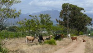 Reyneke farm
