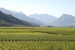 Breedekloof vineyards