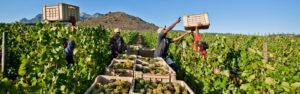 Michael Fridjhon: Does government neglect hinder or help SA wine?, Michael Fridjhon: Does government neglect hinder or help SA wine?