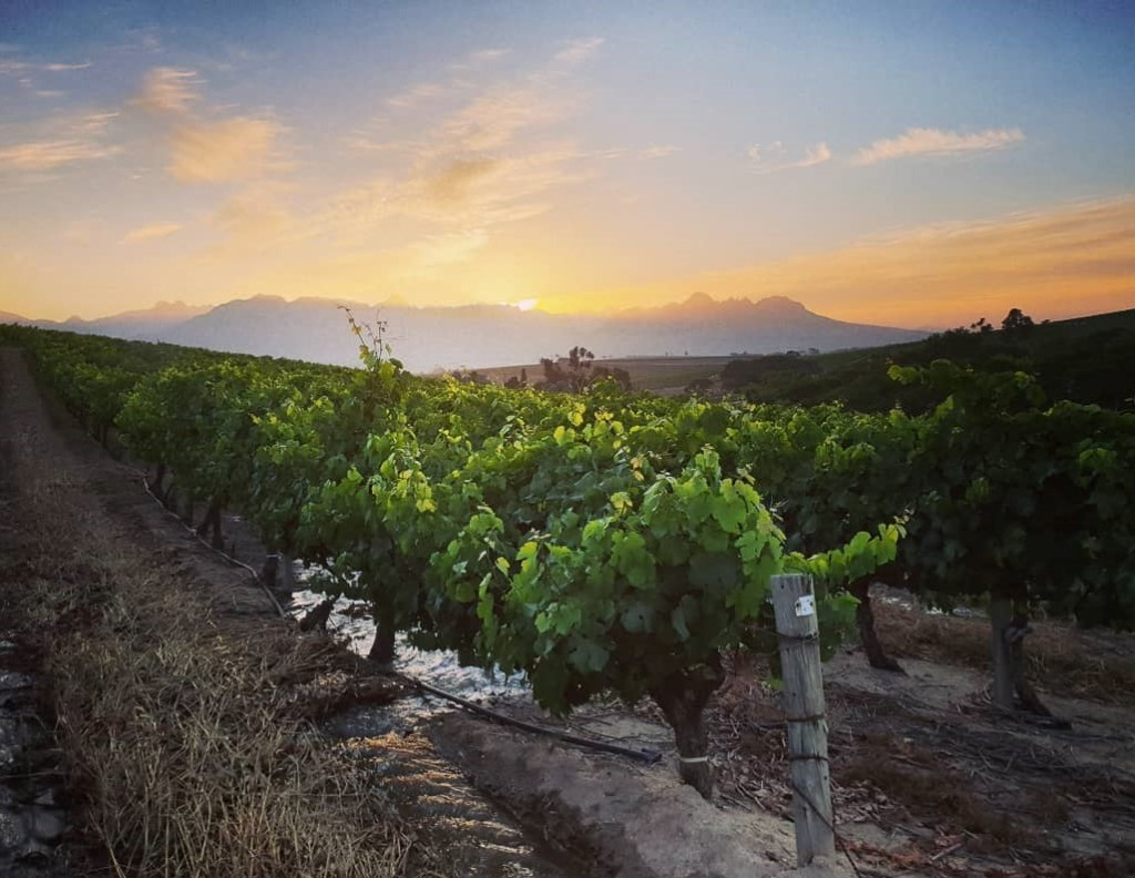Tim James: Thoughts about the Cape's leading wine areas in the 2020s - winemag